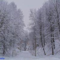 Настоящая Рославьская зима январь 2016 :: Павел Данилевский