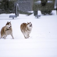 Собачье счастье. :: ALLA Melnik