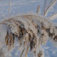 Под снежной шубкой :: missis.litsis Елена