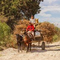по дороге на ранчо :: Elena Spezia