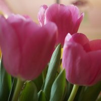 Тюльпаны :: Валерия Брагина