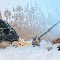 Дон Море со снегом :: Григорий Бортник