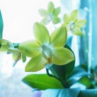 цветок :: Геннадий Клевцов