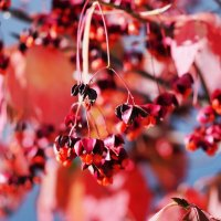 Осенний микс :: Swetlana V