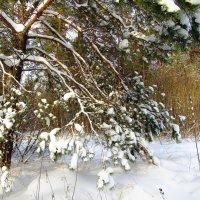 Наступили холода... :: Андрей Снегерёв