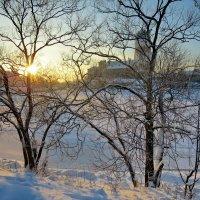 В лучах солнца... :: Светлана