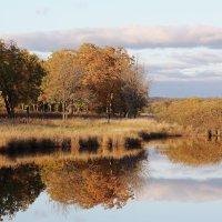 Золотая осень :: Дмитрий Гольнев