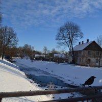 Птицы зимуют. :: zoja