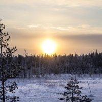 Морозное солнце :: Евгения Л