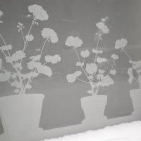 * Зимний сад * :: Алёна Савина