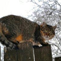 Взгляд хищника :: Милешкин Владимир Алексеевич