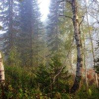 Туманное утро :: Сергей Чиняев