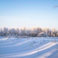 Холодная нежность :: Ольга