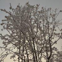 зима... :: татьяна малышева