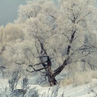 Морозное утро :: Megalara Garuda