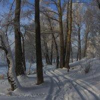 Зимний лес :: Megalara Garuda