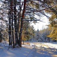 Январских дней холодное тепло.... :: Лесо-Вед (Баранов)