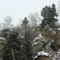 И на камнях растут деревья :: Дмитрий Арсеньев