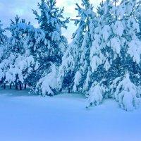 Снежное.. :: Светлана