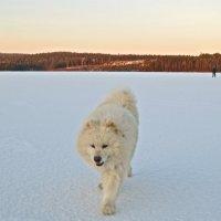 по замёрзшему озеру :: Елена