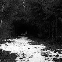 В лесу :: Валерия Ястремская
