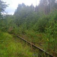 Заброшенная железная дорога :: Алексей