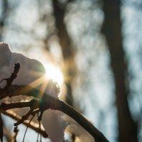 Зима :: Сергей Форос