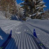 С лыжни :: Walter Dyck