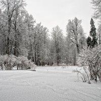 По свежему снегу :: Galina