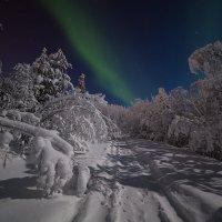 В Заполярном лесу :: Игорь Матвеев
