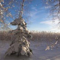 вот такие зимние наряды... :: liudmila drake