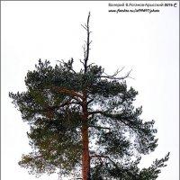 СТАРОСТЬ  И  ОДИНОЧЕСТВО :: Валерий Викторович РОГАНОВ-АРЫССКИЙ