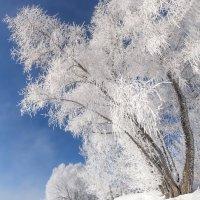 Зимний берег :: Егор Балясов