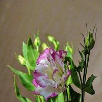 Цветок :: Анатолий Иргл