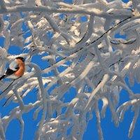 Зимушка-зима :: НАТАЛИ natali-t8