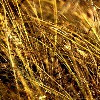 Травы.................... :: Валерия  Полещикова