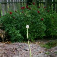 Одинокий,но стойкий :: Валерий Талашов