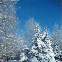 Мороз и солнце :: Ольга НН