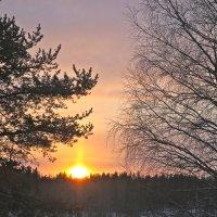 скупое северное солнце :: Елена
