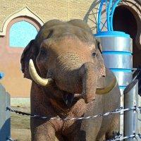 Слон :: Наталья (Nata-Cygan) Цыганова