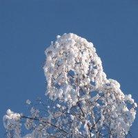 Снежный цветок :: Ольга Иргит