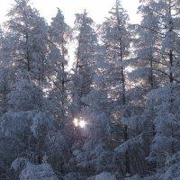 Немного солнца средь деревьев :: Ольга Иргит