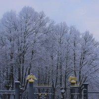 Все в зимнем убранстве.... :: Tatiana Markova