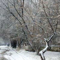 Дивная гармония зимы. :: Валентина ツ ღ✿ღ