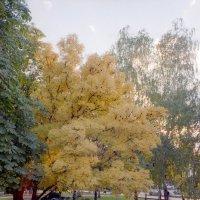 Осень в поселке :: Cepheus