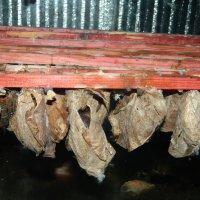 Коконы бабочек :: Юлия Жогина