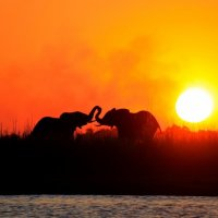DELTA OKAWANGO (БОТСВАНА) :: Volmar Safaris