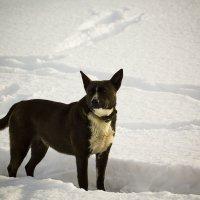На снегу :: Aнна Зарубина