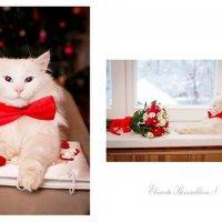 очень серьёзный кот ))) :: Елизавета Ск
