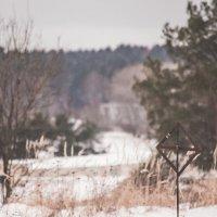 Зимний пейзаж :: Дмитрий Коноплев